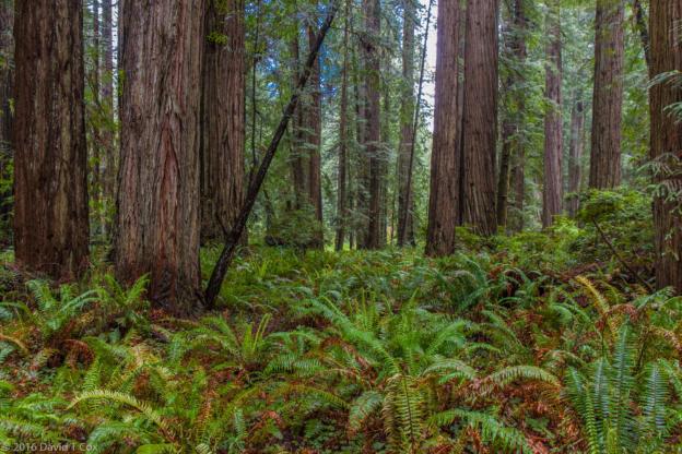 Travel Report On Fort Bragg Redwoods Nat Amp St Parks